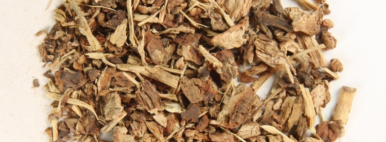sarsaparilla-korzen